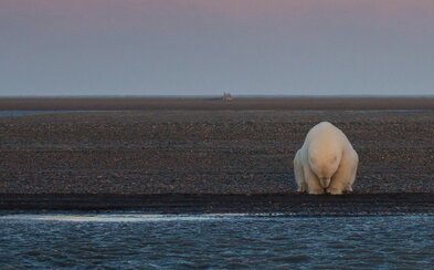 Vybrala sa na Aljašku za snehom a ľadovými medveďmi. Medvede síce našla, ale sneh akoby sa vyparil a nahradila ho depresia