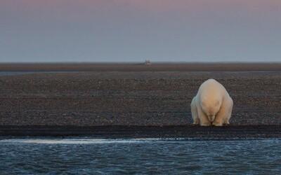 Vydala se na Aljašku za sněhem a ledními medvědy. Medvědy sice našla, ale sníh se vypařil a nahradila ho deprese