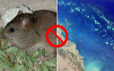 Vyhynul jediný cicavec z územia Veľkej koralovej bariéry. Príčinou sú klimatické zmeny