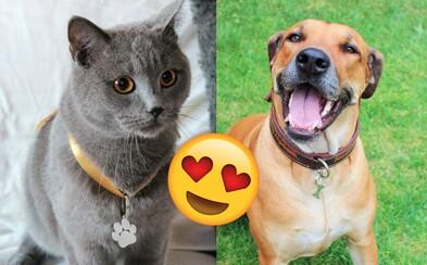 Vyrábajú rozkošné zvieracie šperky, ktoré si Slováci zamilovali: Vďaka nám môžu byť ľudia k miláčikom ešte bližšie (Rozhovor)