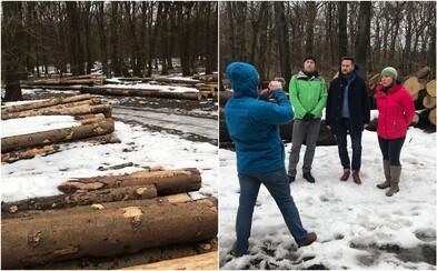Výrub 120-ročných stromov v chránenom území rozhorčil Bratislavčanov, mesto ho chce zastaviť