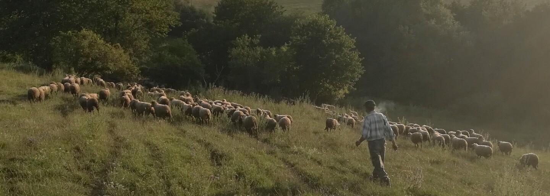Vyskúšali sme si každodennosť na ovčej farme. Prečo je dnes ťažké zohnať mladých do chovu zvierat?