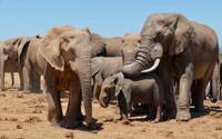 Vyvážanie slonov z Afriky bude skoro úplne zakázané, so slonmi v zoo sa tak môžeme pomaly lúčiť