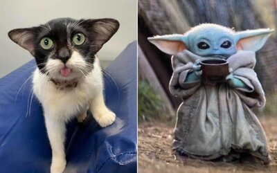 Vyzerá ako Baby Yoda, tvrdia. Zachránená mačka očaruje svojím netradičným výzorom