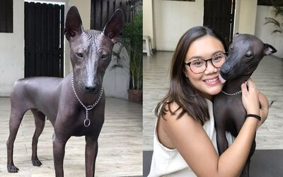 Vzácný pes zmátl tisíce lidí, myslely si, že jde o sochu. Majitelka reagovala i na kritiku