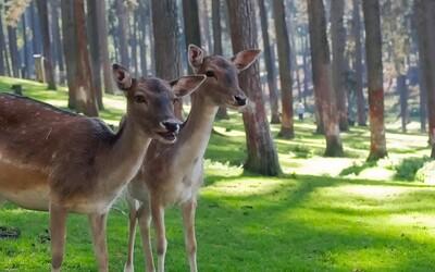 Webový vyhľadávač ponúka na záchranu lesa starého 12 000 rokov 1 milión €. Onedlho z pôvodného 4100-hektárového územia nezostane nič