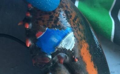 """Z oceánu byl vyloven humr s """"vytetovaným"""" logem Pepsi na klepítku. Objev rozproudil debaty o znečištění životního prostředí"""