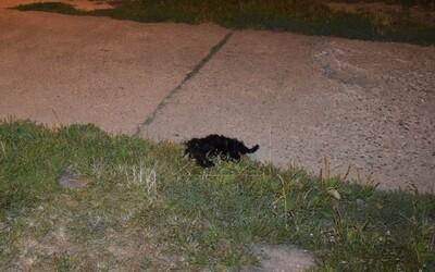 Z okna v Trnave niekto vyhodil šteniatko. Zomrelo okamžite po dopade, podozrivej osobe hrozia dva roky za mrežami