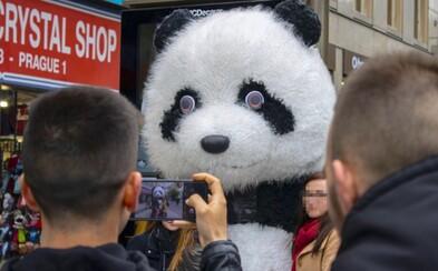 Z Prahy zmizí zvířecí kostýmy i bublináři nejspíš už v říjnu. Město povolí pikolu a hoboj