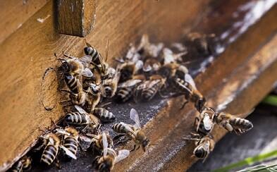 Za posledné tri mesiace zahynulo v Brazílii viac ako 500 miliónov včiel