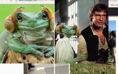 Žaba vyzerajúca ako princezná Leia zo Star Wars sa stala obeťou Photoshopu. Užívatelia internetu sa s ňou bláznivo vyhrali
