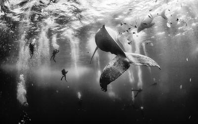Záběr velryby s jejími malými novorozenci se stal nejlepší fotografií podle National Geographic
