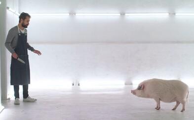 Zabil by si zviera, ktorého mäso potom zješ? Video provokuje mäsožravcov, či by svoje reči premietli do reality