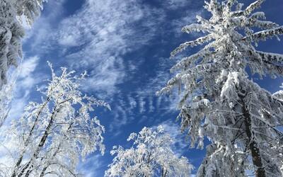 Zabudni na príjemné teploty, Slovensko koncom týždňa znovu zasiahnu mrazy. Záhradkári budú sklamaní, varuje SHMÚ