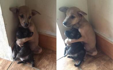 Zachránené šteniatka, ktoré sa pred svetom chránia pevnými objatiami. Aj keď ich zachránili, ľuďom sa ešte len učia dôverovať