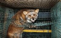 Zákaz provozování kožešinových farem v Česku byl konečně po měsících diskuzí schválen