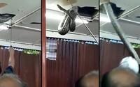 Zákazníci reštaurácie neverili vlastným očiam, keď zo stropu vypadol obrovský had. Mal cez 6 metrov a musel byť vyslobodzovaný