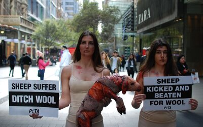 Zakrvácené a roztrhané tělo ovečky symbolizovalo protest aktivistů PETA proti průmyslu s vlnou
