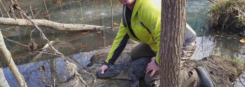 Zamrznuté zaživa, ale v perfektnej kondícii. Aligátory prežívajú obrovskú zimu v Amerike vďaka špeciálnej schopnosti