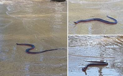 Záplavy neďaleko Sydney vyplavili na ulicu smrteľnú pakobru. Najväčšiu vodu prečkávala na moste