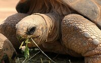 Želvy z Galapág se po sto letech dočkaly mláděte