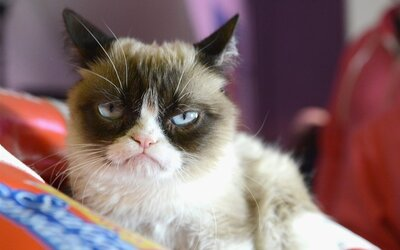 Zemřela Grumpy Cat. Kočku z legendárního meme přemohla infekce