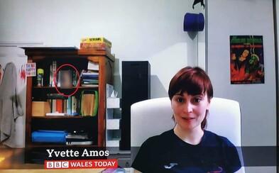Žena měla během videorozhovoru na BBC na poličce dildo