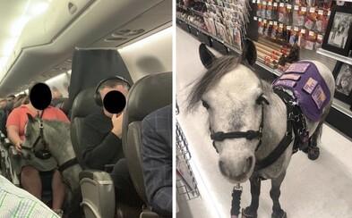 Žena nastúpila do lietadla s miniatúrnym koňom, cestoval spolu s pasažiermi