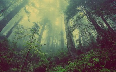 Žena prežila noc v strašidelnom lese v Transylvánii. Teraz prezradila, čo všetko tam zažila
