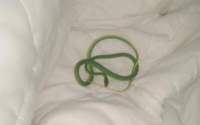 Žena sa v hoteli prebudila s približne metrovým hadom na ramene