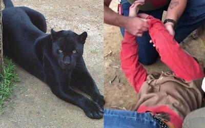 Žena si chtěla udělat selfie s jaguárem, tak mu vlezla do výběhu. Zvíře ji hned napadlo