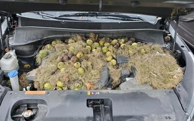 Žene haprovalo auto. Keď sa pozrela pod kapotu, nemohla uveriť vlastným očiam, našla tam plno orechov