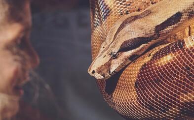 Ženu, která bydlela v bytě se 140 hady, našli mrtvou. Kolem krku měla obtočenou dvoumetrovou krajtu, která ji uškrtila