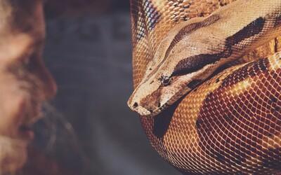 Ženu, ktorá bývala v byte so 140 hadmi, našli mŕtvu. Okolo krku mala obtočeného dvojmetrového pytóna, ktorý ju uškrtil