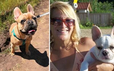 Ženu našli mrtvou v jejím vlastním domě, zabil ji její domácí mazlíček