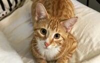 Ženu poškriabala vlastná mačka, neskôr v nemocnici bojovala o holý život. Do tela jej zviera dostalo smrteľnú mäsožravú chorobu