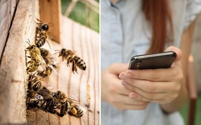 Žiarenie z mobilov možno zabíja včely a ostatný hmyz.Vedci objavili nové súvislosti
