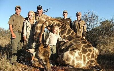 Žirafám hrozí tiché vyhynutie. Zvieratá zabíjajú najmä lovci trofejí