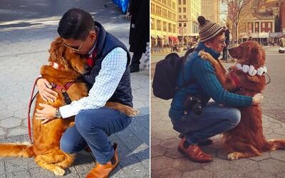 Zlatá retríverka, ktorá najradšej rozdáva objatia ľuďom na ulici. V New Yorku sa z nej stala hotová turistická atrakcia