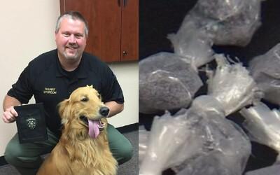 Zlatý retríver objavil heroín za 72 000 €. Rodinný pes spôsobil majiteľom poriadne problémy