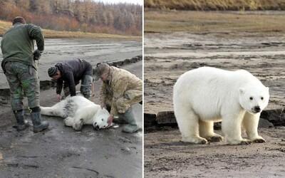 Zmätení Rusi objavili ľadového medveďa takmer 1000 kilometrov od miesta, kde sa zvykne vyskytovať. Kým prišla záchrana, nakŕmili ho rybami