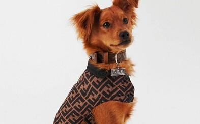 Značka Fendi predstavuje luxusnú cestovnú kolekciu pre domácich miláčikov. Kožený obojok môže byť tvoj za 220 eur