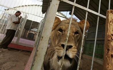 Znojmo končí s pronájmem pozemků cirkusům. Odmítá podporovat týrání zvířat