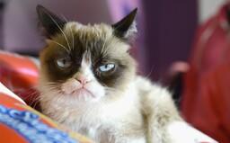 Zomrela Grumpy Cat. Mačku z legendárneho meme premohla infekcia v močovodoch