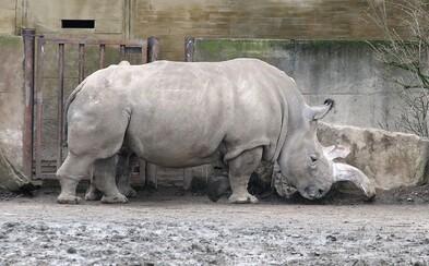 Zoo ve Dvoře Králové bude jako jediná v Evropě využívat k prohlídkám safari ekologické elektromobily