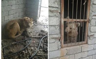 Zoologická záhrada v irackom Mosule, kde zvieratá umierajú hladom. Na vojnu doplácajú tie najnevinnejšie stvorenia na Zemi
