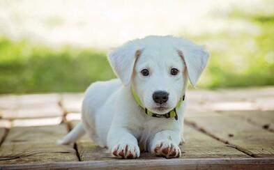 Zviera už od septembra nebude vecou. Parlament schválil zmenu zákona, ktorá ich vníma ako cítiace bytosti