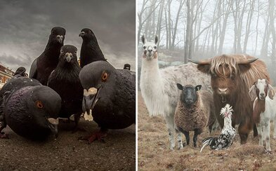 Zvieratá pózujúce tak, akoby sa chystali vydať najočakávanejší album celého roka. Mnohí interpreti by im mohli závidieť