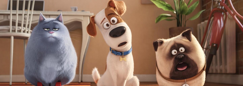 Zvieratá sa zbláznili! Prvý trailer pre Tajný život maznáčikov 2 ti ukáže, čo sa deje u veterinára