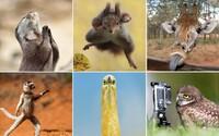 Zvieratá si to v súťaži o najvtipnejšiu fotku z divočiny rozhodne užívajú. Vychutnajte si prírodu z trocha iného pohľadu